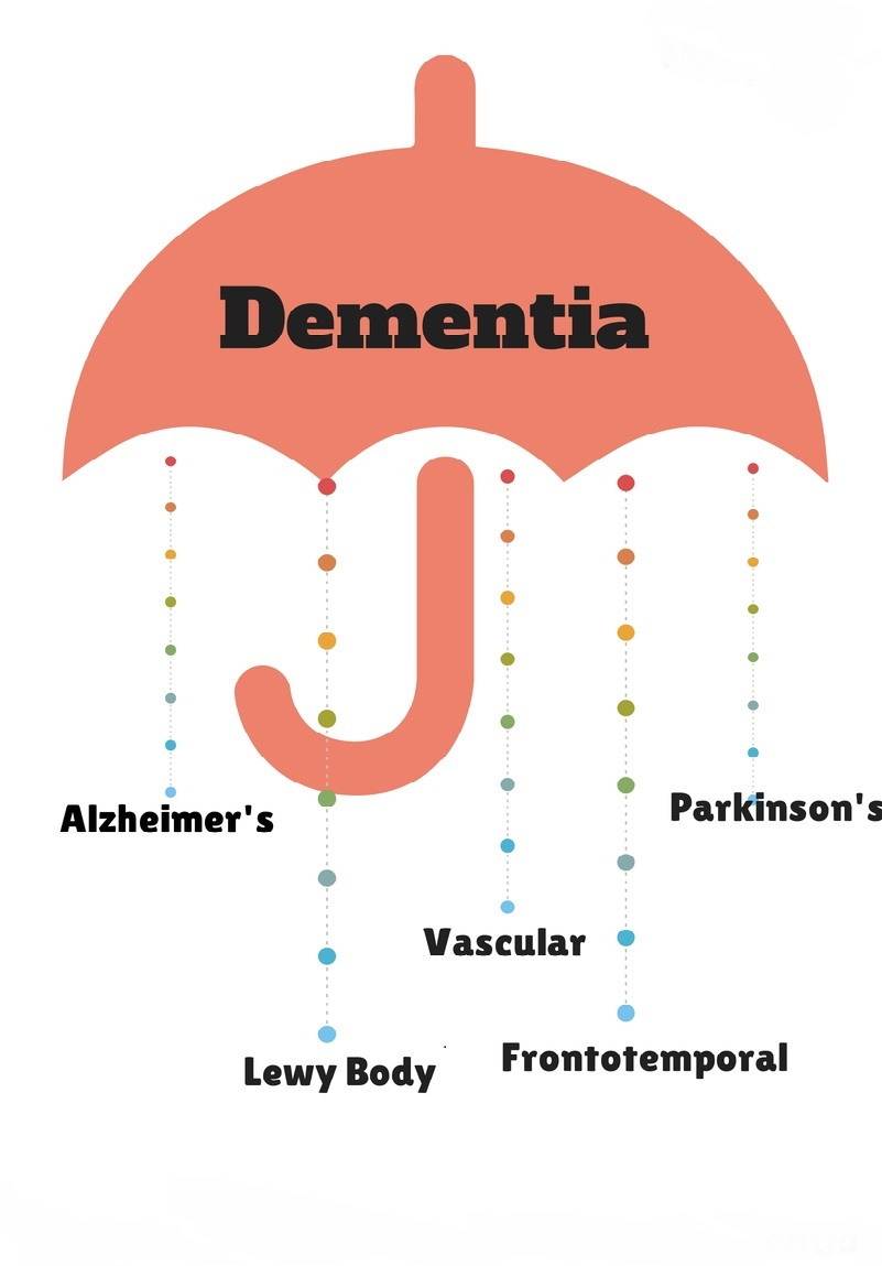 difference between dementia and alzheimer's - 736×1104